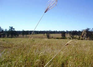 Maryborough Grass Seeds
